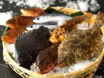 ◆釣りたて、獲れたて!その日に仕入れたばかりの豊富な天然魚を、持ち味を生かしながら丁寧に調理