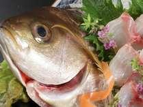 季節ごとの旬肴を日替わりでご用意いたします。「天然鮮魚の幸盛り」