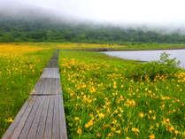 【トレッキング】6月のニッコウキスゲや新緑の裏磐梯を歩く、晴れた日のトレッキングや登山は最高の贅沢