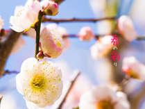 春の彩を感じにぜひ、伊勢志摩へ。
