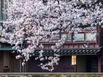 桜シーズン 4月上旬