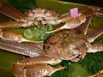 【柴山がに】タグ付きの地蟹!やっぱり冬は美味しいカニがいいですね♪