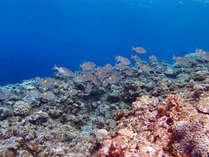 *【周辺】透明度も高く、綺麗な海では数多くの魚が生息しています。