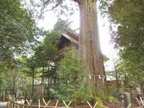 須佐神社の本殿とご神木「大杉さん」です。ここは全国有数のパワースポットと言われます。