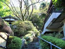 石庭の玄関に続く石段。季節の緑がお出迎えします。