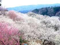 【大好評♪】春の景と味を満喫♪~圧巻!名勝 月ヶ瀬梅渓送迎付き1泊3食付大和遊膳宿泊プラン