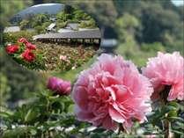 【ぼたんまつり】花のお寺「長谷寺」~7,000株150種類のぼたん~送迎付き 大和遊膳コース