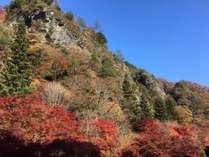 見上げるほどに巨大な大岩壁と、真っ赤に燃える紅葉の対比が絵になる古岩屋