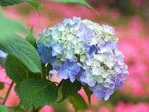 シェフおまかせの★紫陽花会席プラン ■会席料理■広々和室■若干の訳あり■