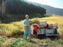 自家栽培コシヒカリはオーナーが手がけております。