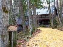 【アプローチ】落ち葉の絨毯が客人を迎えます