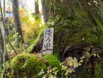 倭乃里の庭でゆっくり自然を味わえます。