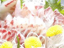 氷見の新鮮食材♪とろける舌触り!
