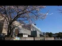 かんぽの宿潮来入口 桜