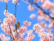 【お花見プラン】嘉瀬川沿いの桜並木でゆったりお花見散歩♪夕食時ワンドリンクサービスもあります♪
