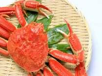 【本ずわい蟹】今年はやります!!「本ズワイ蟹」を満喫プラン、ついに登場★