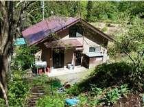 春の別邸、山野草で癒されてください。