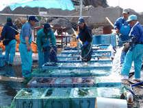 *「セリの鑑札」を所持!新鮮で良い魚介類を仕入れております,和歌山県,豪快!活魚料理 高よしパークホテル