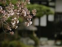 四季折々の表情を見せる庭の木々。春は桜も愉しめる