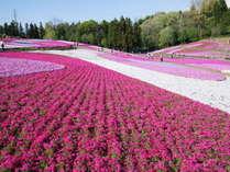 【見る】羊山公園・芝桜 ※Web Guide秩父より