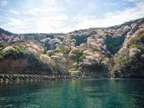 【期間限定!春爛漫プラン】 ふぐ料理と天然山桜 ☆船上お花見プラン☆
