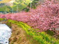 伊豆高原桜まつり◆愛犬と一緒に桜並木をお散歩♪お花見プラン【お刺身盛り合わせをサービス】