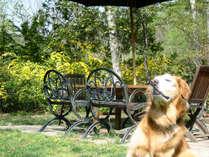*ランボォを満喫するワンコ/お庭でわんこも気持ちよさそう