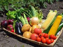 採れたての自家製無農薬野菜
