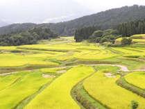 鉢伏山の中腹に広がる棚田。兵庫の屋根氷ノ山を正面に望む景勝地に今も残る日本の原風景。