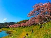 2/10→3/10限定!!みなみの桜と菜の花まつり