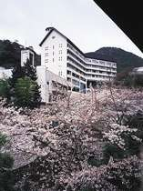 春の季節は桜がとてもきれいです