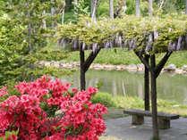 【春の中島公園】鮮やかなツツジ