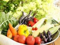 片品産 夏野菜 一例