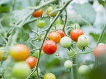 【日高の豊かな食材たち】野菜