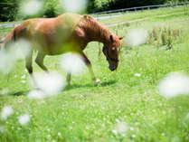 草を食む馬たちが癒やしを与えてくれます。