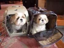ペットも大切な家族♪動物大好きなスタッフばかりですので、安心して連れてきてください(^^)