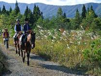 【乗馬で高原満喫】木曽馬牧場で乗馬体験付き 1泊2食プラン