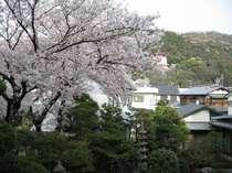 桜でかわいいピンク色に彩られるホテル庭園