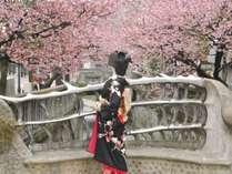 <糸川>春は川沿いに日本一の早咲きの桜が見頃を迎えます。