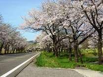 高原の途中にある桜並木。ゴールデンウィーク明け頃です