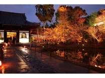 秋の高台寺ライトアップ