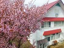 当館すぐそばにある桜。濃いピンク色がきれい!見頃は例年GW頃です。