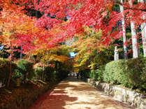 *【秋】高野山