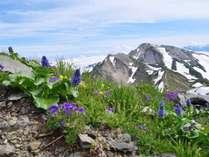 *【白馬アクティビティ】比較的標高の高いエリアまでスキー場のリフトを使ってアクセスが可能です。