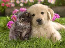 愛するワンちゃん・猫ちゃんと何時も一緒