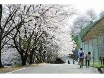 2021.3/28~4/5頃がお花見シーズンとなる見込み!