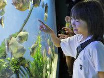 【鳥羽水族館】珍しい生き物に興味津々!お子様と一緒に世界の海を見に行こう♪※画像はイメージです。