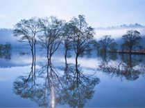幻想的なひと時を☆一ヶ月間限定!山形県飯豊町白川湖の水没林プラン