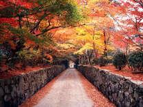 紅葉の『興生寺・琴坂』例年の見ごろは11月下旬~12月上旬
