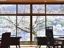 ロビーからながめる宇治川沿いの桜。例年の見頃は3月下旬~4月上旬です。
